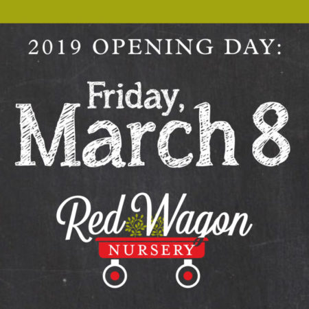 Grand Opening March 8